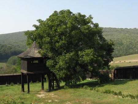 Manastirea Poglet