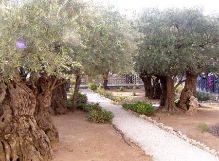 Gradina Ghetsimani
