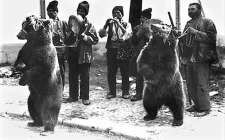 Ursul - Bucuresti