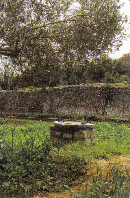 Icoana Sfintilor Trei Ierarhi - Prodromu