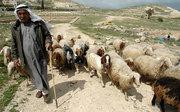 Pilda pastorilor, a lupilor si a oilor